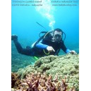 Paket Wisata Diving Pulau Guraici Maluku Utara - Diving Tour in Guraici Island North Maluku
