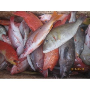 Jual Ikan Kerapu Fresh Aneka Jenis Ikan Kerapu Fresh Dari Perairan Maluku Utara Ikan Kerapu Fresh