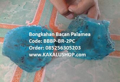 Bongkahan Batu Bacan Palamea Biru Asli Palamea Kasiruta
