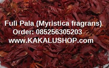 Fuli Pala (Bunga Pala) atau Mace